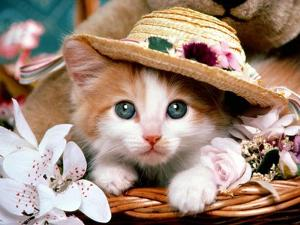 File:300px-Cat pictures by feral-cat-news blogspot com-cat-5.jpg