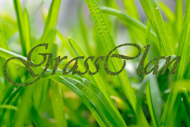 File:GrassClan.png