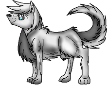 Dog Conest3