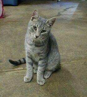 Tabby cats 1