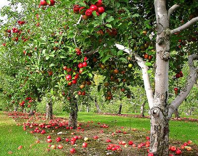 Orchard Retirement Community