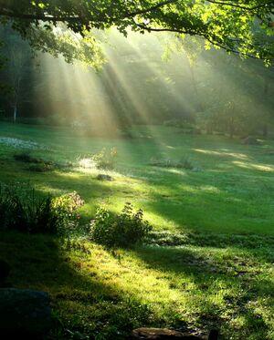 Beautiful-Nature