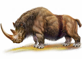Woolly-Rhino