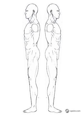 File:Anatomy Drawings.jpg