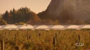 603 Farming area in Sanctum