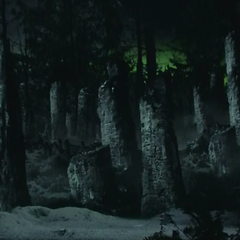 Verbrannte Bäume durch temporale Störung