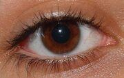 Elvira's Eye