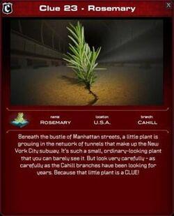 300px-Rosemary