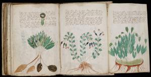 300px-Voynich Manuscript (170)