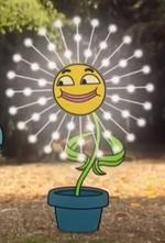 Lesilie dandelion