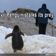 Evenstar and the penguin of death