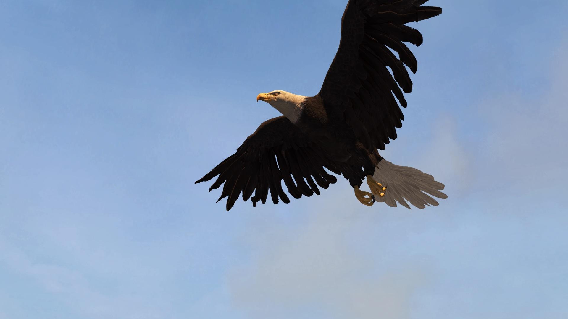 Águila | Animuspedia | FANDOM powered by Wikia
