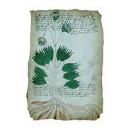 Página del Manuscrito Voynich01