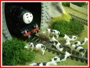 Nigel Herbert and the Cows1