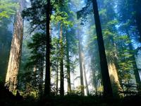 Woods of Diana
