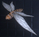 Blood-moth