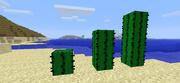 Minecraft-cactus