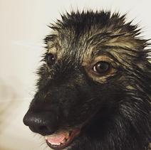 Mishka When bath is life