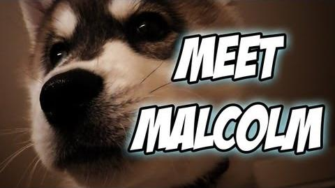 Meet Malcolm