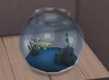 Anal Fishy