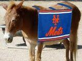 Mettle the Mule
