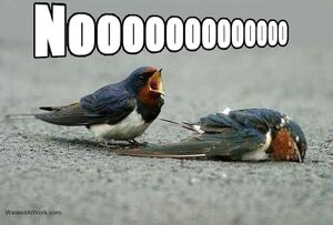 Birds noooo