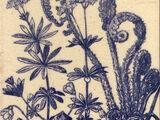 Botanical Series - Maw & Co
