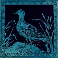 Bird 66