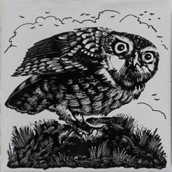 Owl - Dorincourt