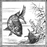 UnderwaterScenes 11
