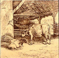 Two Cows and Calf