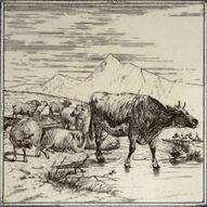 Minton hollins cow & 7 sheep