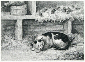 1. The cat and the mice