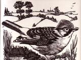 British Birds - Dorincourt Industries