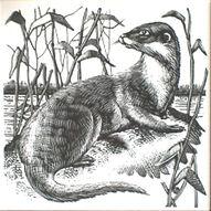 Weasel dorincourt tiles