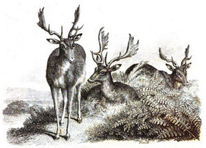 4. The Sick Stag