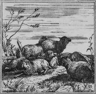 Seven Sheep in a Field