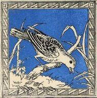 Bird 5c