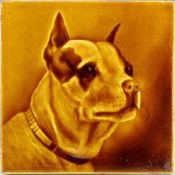 Bull Terrier - Sherwin & Cotton