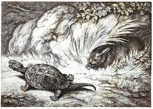 2. The Hare and the Tortoise