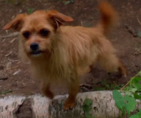 Latest Male Dog Names