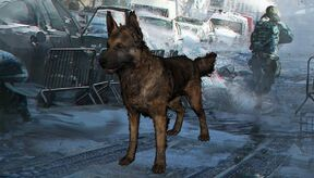 400px-Thedivisiondogs