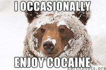 Cocaine-bear--i-enjoy-cocaine