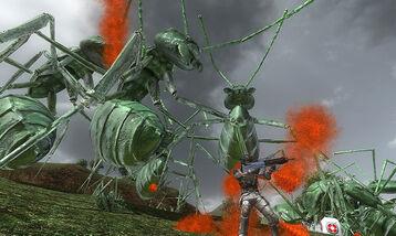 Dark Green Ants