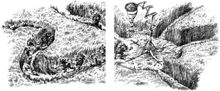 Trockbladderpitch