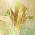 Cebolleta Muy Asombrosa