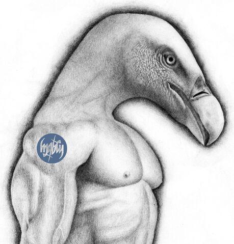 File:Vulture-drawing-wm.jpeg