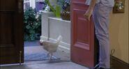 Chicken Becky
