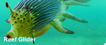 File:Reef glider.png
