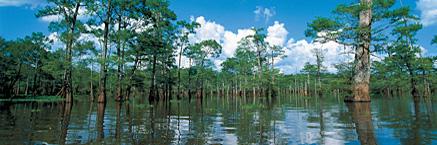 File:Bengal swamp.jpg